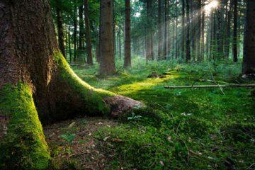 parquet-foresta
